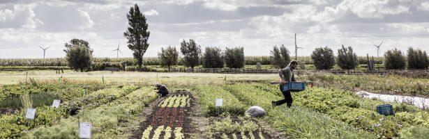 Het 21ste-eeuwse stadspark is een voedselpark